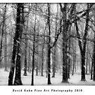Winter Jungle by David Kuhn