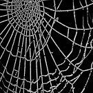 spider web by Evan Sharboneau