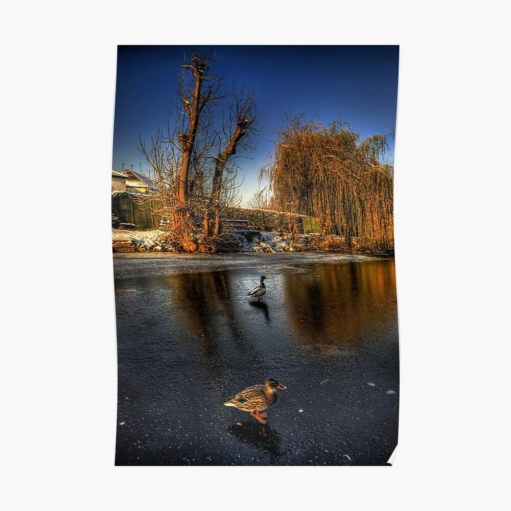 Ducks On Ice  Poster