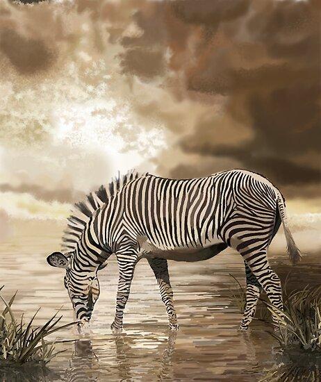 Zebra by Skot  Schuler