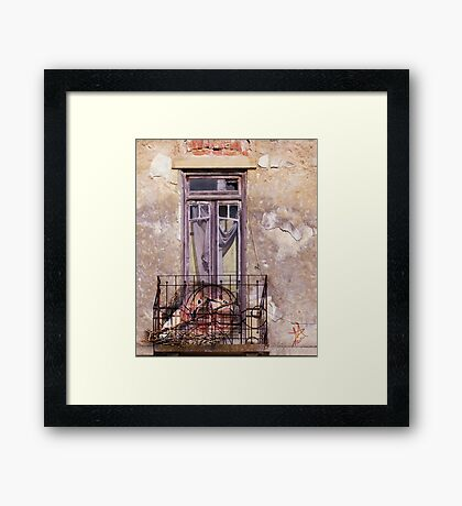 Nest of Love Framed Print