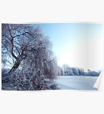 Weeping willow in morning frost Poster