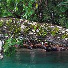 Jungle Shoreline I by Reef Ecoimages