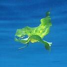 Leaf over Reef II by Reef Ecoimages