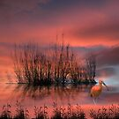1414 by peter holme III