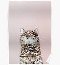 Schöne Katze aufzublicken Poster