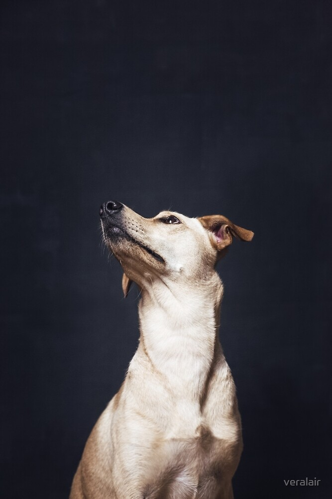 Portrait of a beautiful dog by veralair