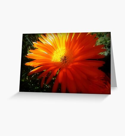 Succulent - Common Orange Pigface in Garden Greeting Card