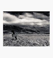 Pony - Iceland Photographic Print