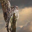 Silently Watchful Nightjar by byronbackyard