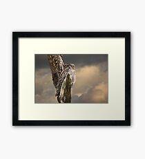 Silently Watchful Nightjar Framed Print