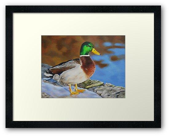 Mallard duck on ice by lanadi