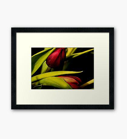 Winter Tulips II Framed Print