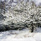 Snow Tree by Ann Garrett