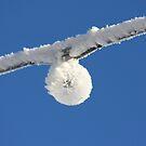 Snowy Bulb ! by lendale