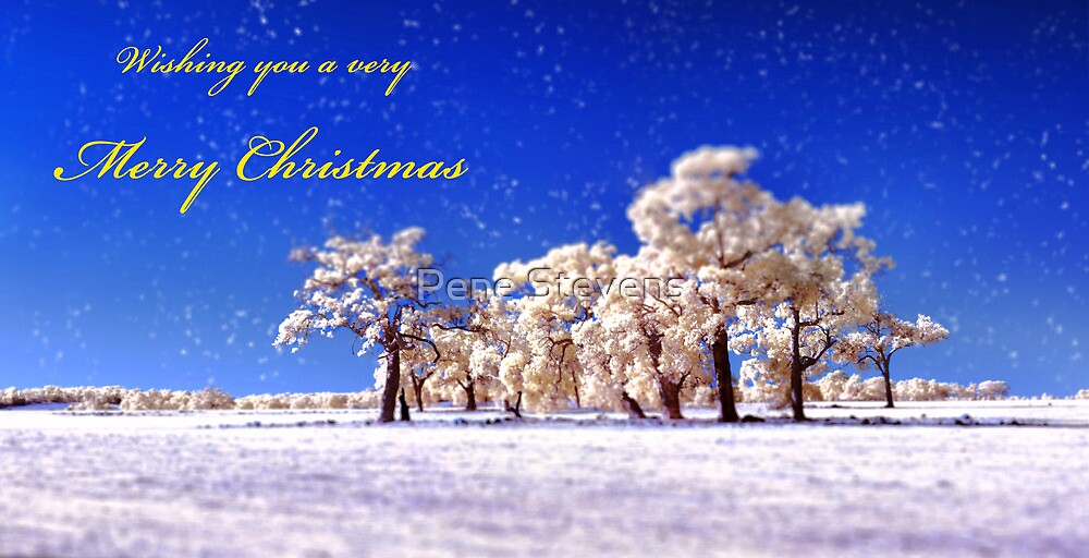 Wishing you a very Merry Christmas by Pene Stevens