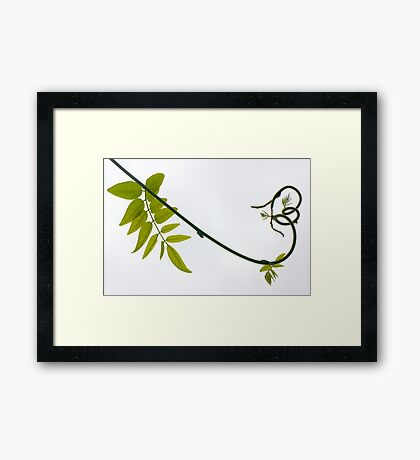 carnival wisteria Framed Print