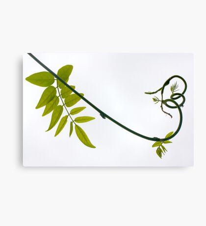 carnival wisteria Canvas Print