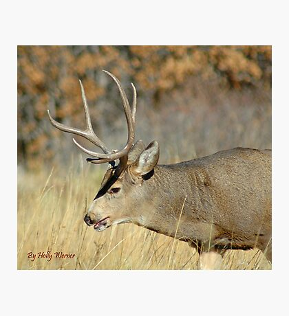 Fall Stag  Photographic Print
