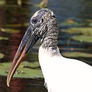 Wood stork up close and personal by Anthony Goldman