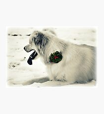 Broach for Christmas Photographic Print