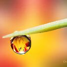 Daylily in a Droplet by Anita Pollak