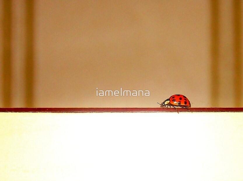 Walk the line by iamelmana