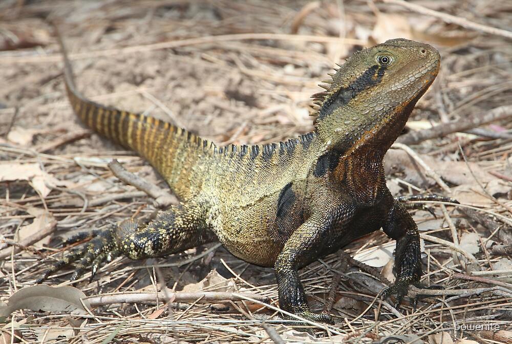 "Australian Water Dragon: ""''Australian Water Dragon''"" By Bowenite"