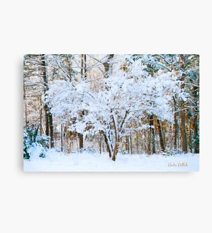 Siebold Viburnum in the Snow Canvas Print