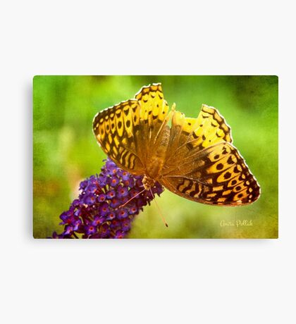 But I Can Still Fly! Canvas Print