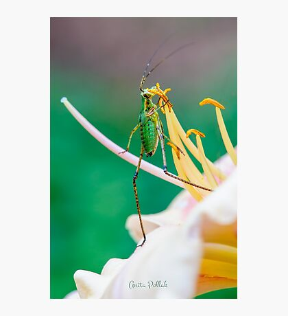 Waltz with a Flower  Photographic Print