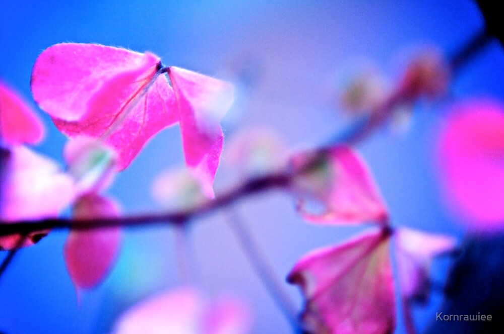 When Pink meet Blue: On featured: The Power of Simplicity Group by Kornrawiee