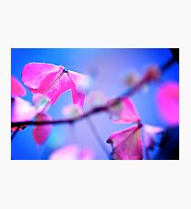 When Pink meet Blue: On featured: The Power of Simplicity Group Photographic Print