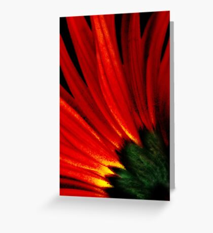 Daisy Aflame Greeting Card