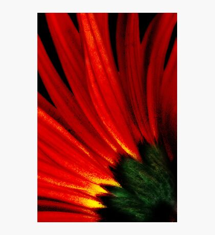Daisy Aflame Photographic Print