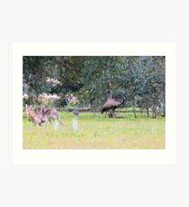 Emus & Kangaroos Art Print
