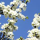 Blue Sky Blossom by LydiaWoods