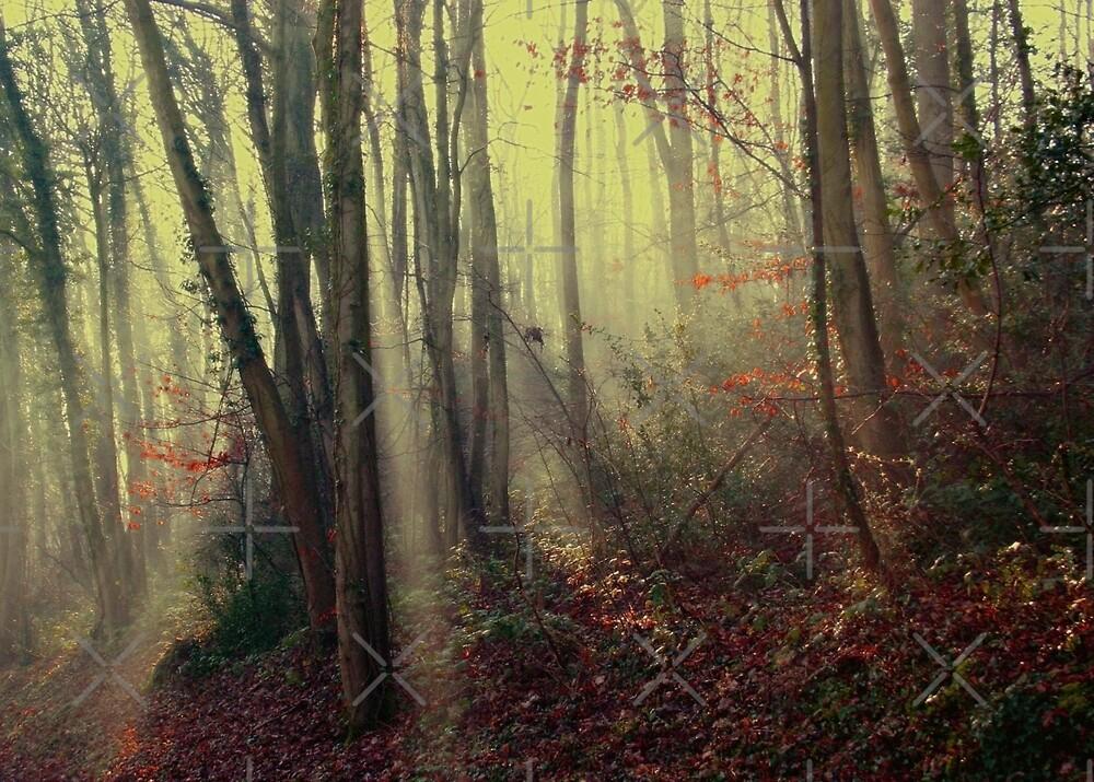 Misty Morning  by Geoff Carpenter