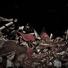 Remnants on the Ground by LydiaWoods