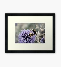 Bumble Bees Framed Print