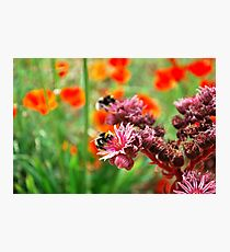 Bumble Bees2 Photographic Print