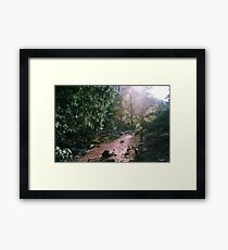 Afternoon Glory - Proxy Falls, OR Framed Print