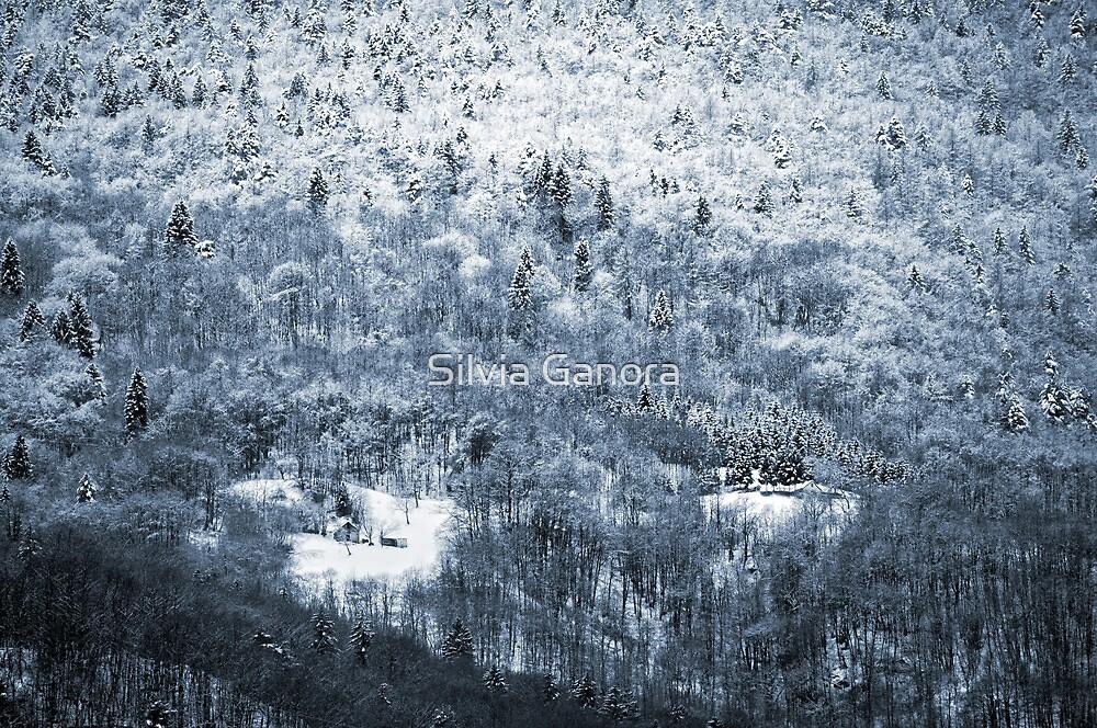Winter Wood by Silvia Ganora