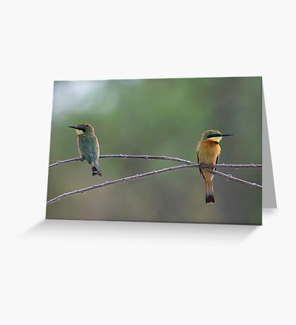 Little Bee-eaters Greeting Card