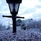 Frost by shutterclick