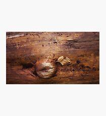 wood life Photographic Print