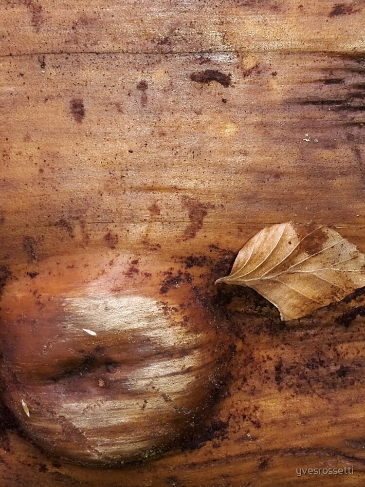 wood life by yvesrossetti