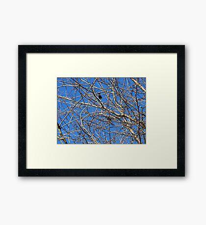 Tree in Winter against Blue Sky Gerahmter Kunstdruck