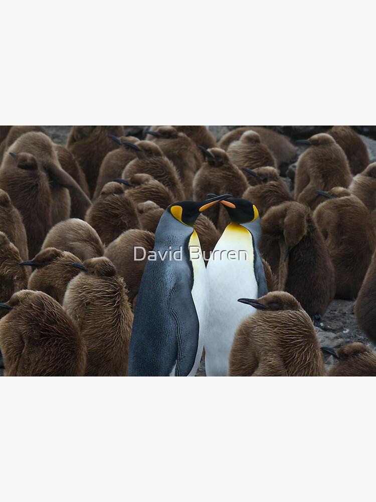 Kings and chicks by DavidBurren
