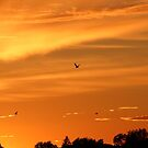 Beautiful Orange Sunset by hummingbirds
